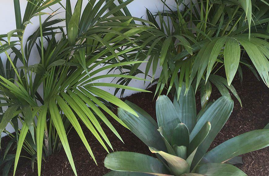 landscape_0003_indoor garden